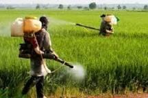 آغاز عملیات مبارزه با علفهای هرز در مزارع گندم اردبیل