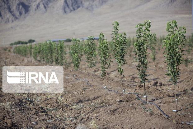 ۱۰۰ هکتار از اراضی بیابانی البرز زیر پوشش گونههای بومی قرار میگیرد