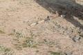 اصابت خمپاره به روستایی در آذربایجان شرقی در پی درگیری جمهوری آذربایجان و ارمنستان + عکس