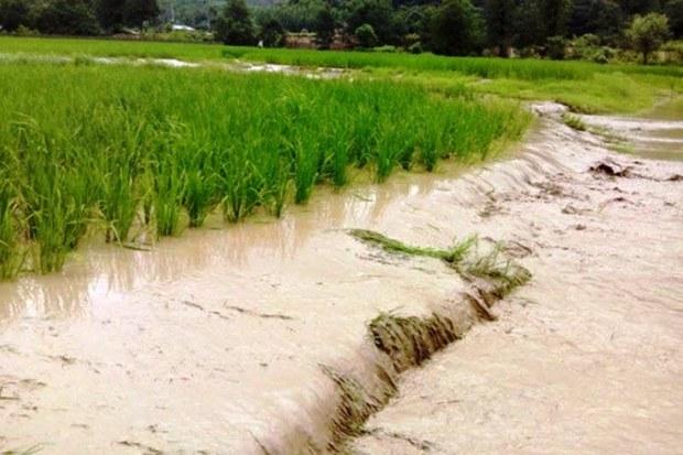 سیل 980 میلیارد ریال به بخش کشاورزی ایلام خسارت زد