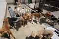 کشتار مخفیانه سگ های ولگرد در اهواز + فیلم