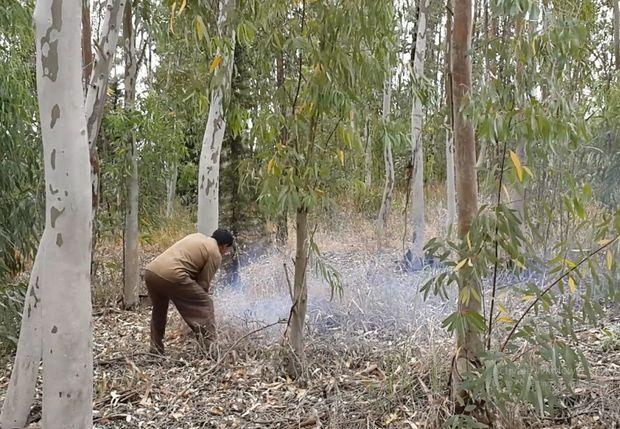 افزایش قیمت چوب دلیل قطع گسترده درختان در دزفول