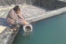288 هزار قطعه بچه ماهی سردآبی در استخرهای استان رهاسازی شد