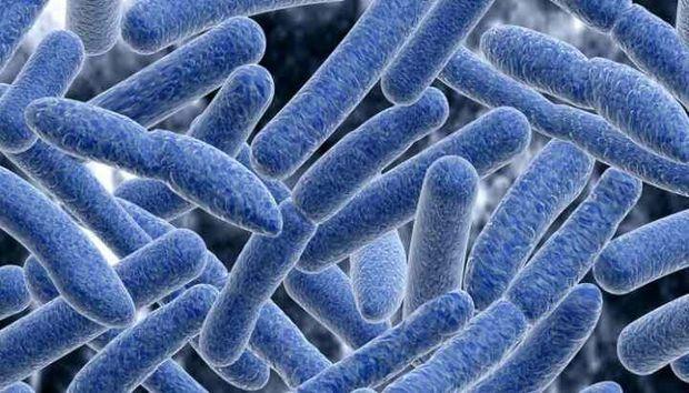 مسمومیت 43 نفر در زنجان با سمّ بوتولینوم