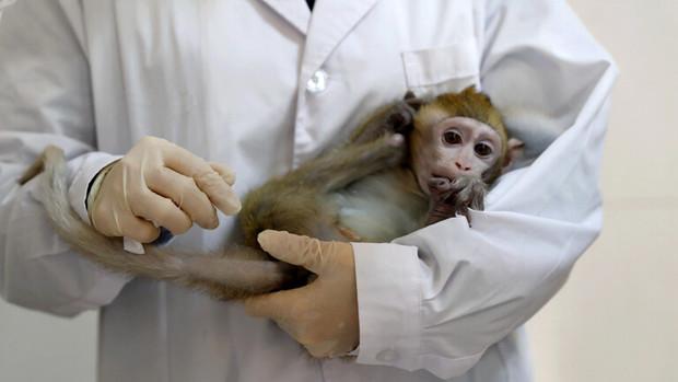 مرگ اولین چینی در اثر ابتلا به «ویروس میمونی»