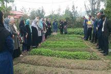 باغچه محصولات سالم در روستاهای گیلان راه اندازی شد