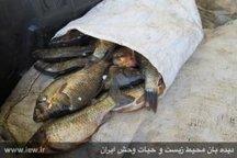 ۶۰ قطعه ماهی از متخلفین زیست محیطی در رومشکان کشف و ضبط شد