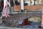 ۱۰ قصابی غیرمجاز در مریوان فعالیت میکنند