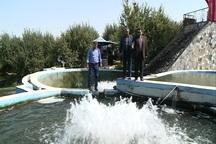 هفت میلیون قطعه بچه ماهی در استان اردبیل تولید می شود