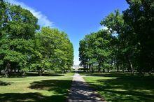 سوزندان گردههای درخت کانادایی در پارک اسپانیایی