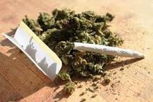 معتادان به گُل تمایلی به ترک ندارند