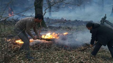 ژل ویژه برای جلوگیری از آتش سوزی جنگل ها تولید شد