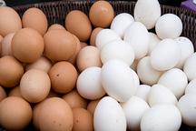 نرخ تخم مرغ ۲ هزارتومان زیر نرخ مصوب