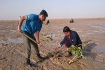 غرس 11هزار اصله نهال حرا در ساحل دیلم بوشهر آغاز شد