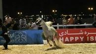 توبیخ برگزارکنندگان جشنواره اسب در آمل