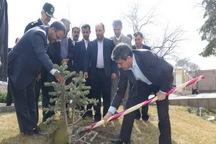 استاندار آذربایجان غربی نهال غرس کرد
