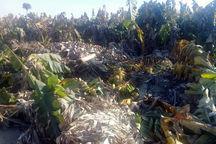 سیلاب ۴۰۱میلیارد ریال خسارت به بخش کشاورزیسیستان وبلوچستان وارد کرد
