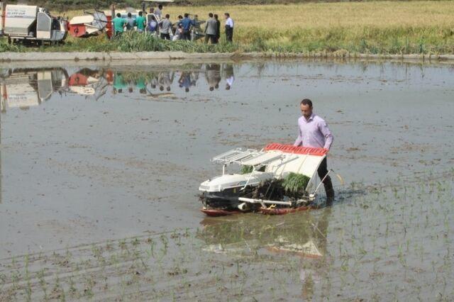 کمبود بانک نشا، پاشنه آشیل کاهش هزینه تولید برنج در مازندران
