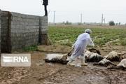 سیل ۱۵ میلیارد تومان به عشایر کرمان خسارت زد