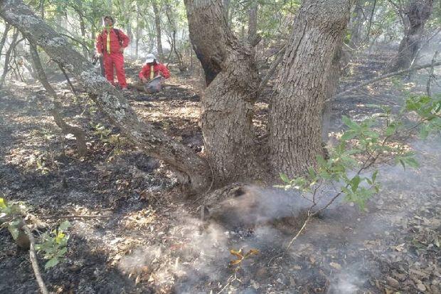آتش همچنان در طبیعت کامفیروز مرودشت جولان می دهد