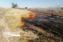 آتش زدن بقایای محصولات کشاورزی جرم است