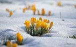 ترفندهای حفظ گیاهان از یخ زدگی