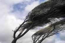 طوفان قرچک و پاکدشت را در نوردید/ کاهش میدان دید مردم