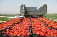 اعتراض کشاورزان جنوب کرمان به جاده کشیده شد+ فیلم و عکس