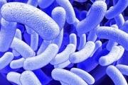 با تمیزی بیشتر میکروب ها مقاوم تر می شوند!