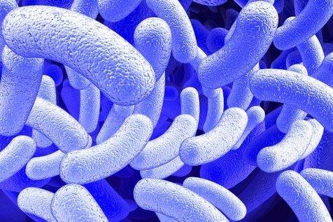 ساخت مخزنی از میکروب ها برای نجات جان انسانها