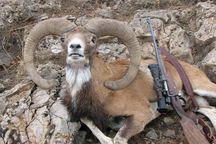 شکارچیان غیرمجاز در آبیک به دام افتادند
