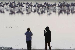 منتخب تصاویر امروز جهان- 3 بهمن