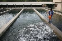 صنعت پرورش آبزیان در قم توسعه می یابد