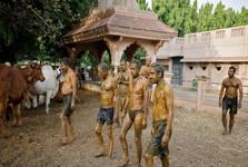پزشکان هندی:سرگین و ادرار گاو کرونا را درمان نمی کند، لطفا استفاده نکنید!
