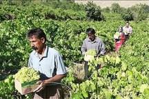 600 میلیارد ریال برای توسعه باغداری در ایلام تخصیص می یابد