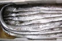 صادرات آبزیان ازهرمزگان 130میلیون دلار ارزآوری داشته است