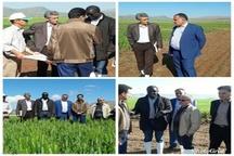 پایگاه نوآوری پروژه ایران ایکاردا در شهرستان کوهدشت