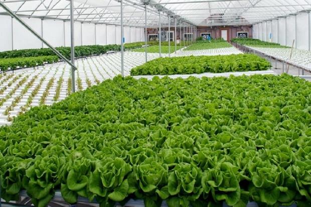 پنج مجتمع گلخانهای درکهگیلویه وبویراحمد در حال ساخت است