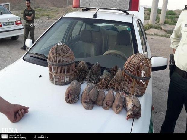 صیاد پرندگان وحشی در تربت حیدریه به خدمت رایگان محکوم شد