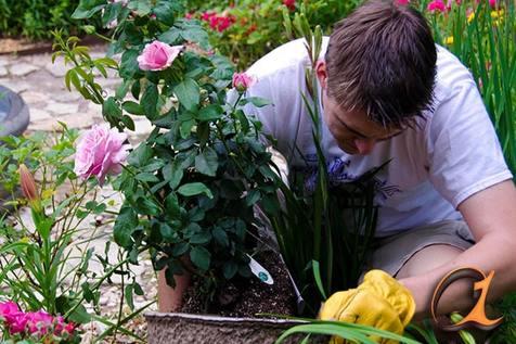 آموزش کاشت گلهای زمستانی