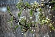 بارش باران در تربتحیدریه ۳۱ درصد رشد داشته است