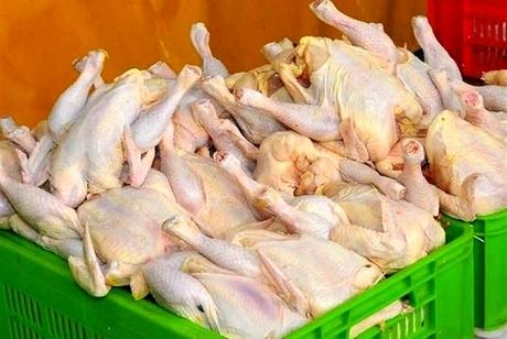 172 تن مرغ در کردستان توزیع شد