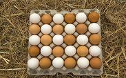 باورهای غلطی که در مورد تخم مرغ رواج یافته اند/ راه نگهداری طولانی مدت