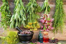 2300 گونه گیاهی در کردستان شناسایی شده است