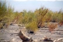 15طرح منابع طبیعی در سیستان و بلوچستان آماده افتتاح است
