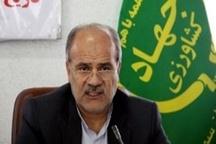 توزیع هزار تن برنج وارداتی برای تنظیم بازار در البرز