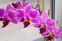 تولید گل ارکیده برای کشور ارزآوری بالا دارد