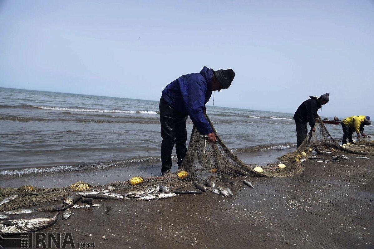 کرونا ، صید ماهیان استخوانی را در مازندران نصف کرد
