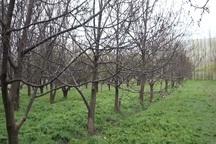 سطح باغات در اراضی شیب دار استان اردبیل توسعه می یابد