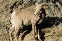 انتشار تصاویر شکار درفضای مجازی شکارچیان متخلف را گرفتار کرد